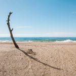 Foto semanal: Árbol en la playade Antonio Martínez Corral