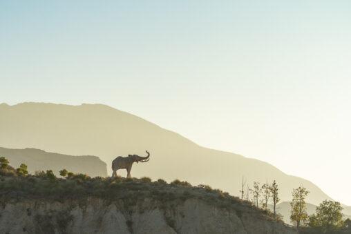 Elefante, una foto de Antonio Martínez para instantes.net